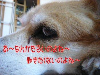 P1100380HP.jpg